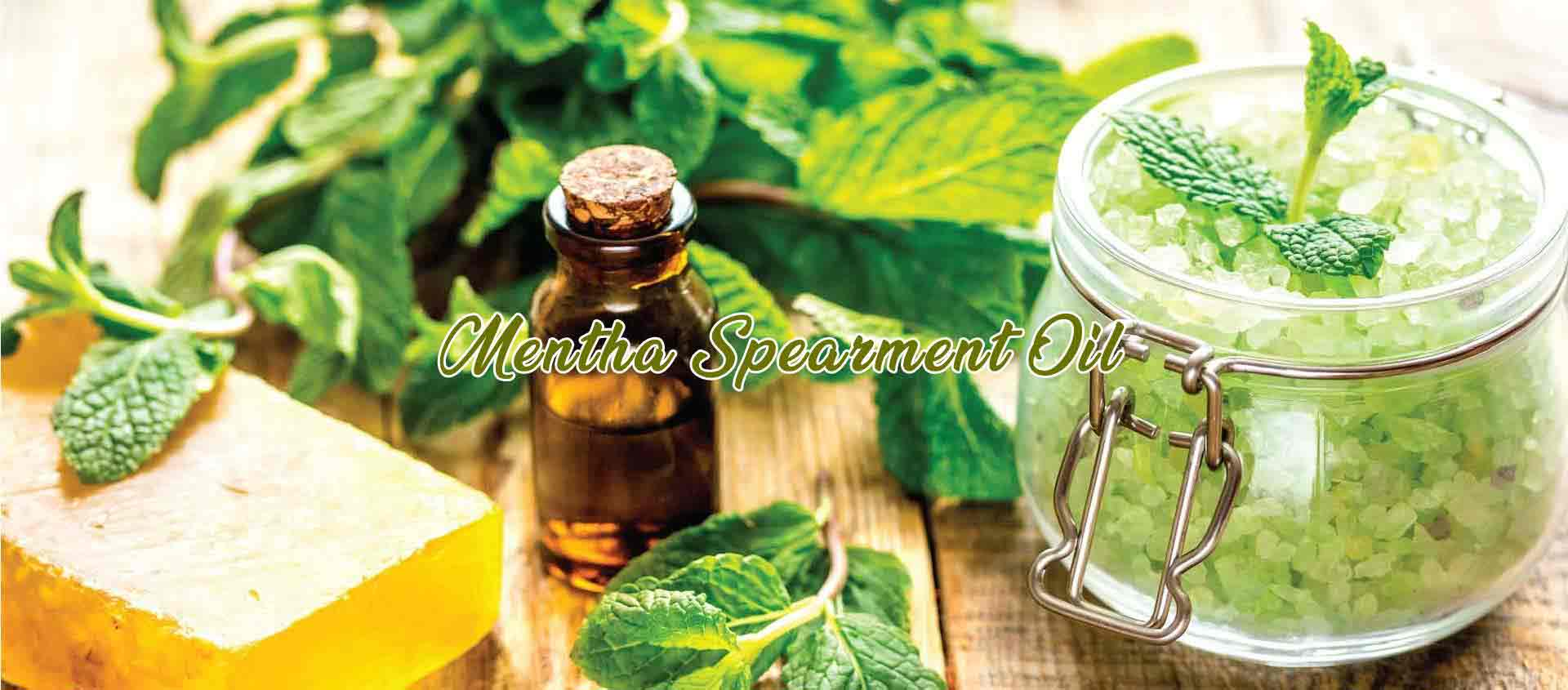 Mentha Spearment Oil