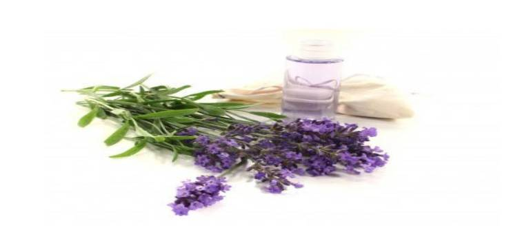 Lavender oil In Koppal